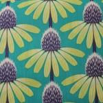 echinacea-lime-01